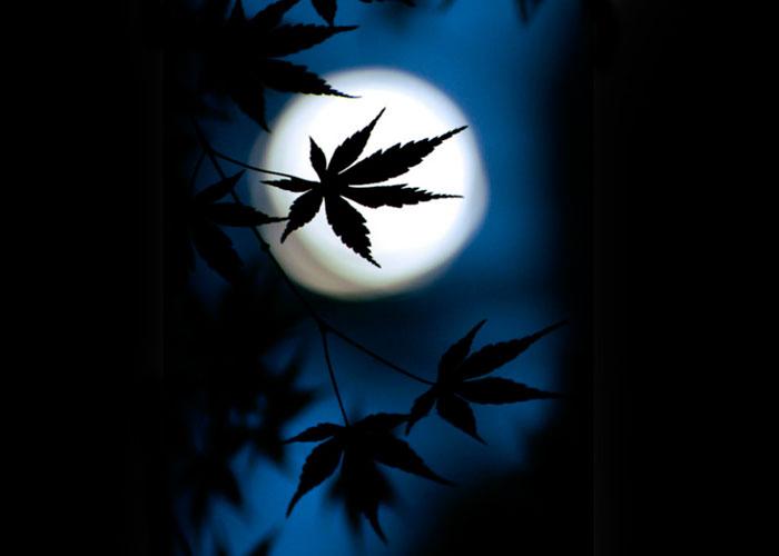 Influencia de la Luna en las plantas