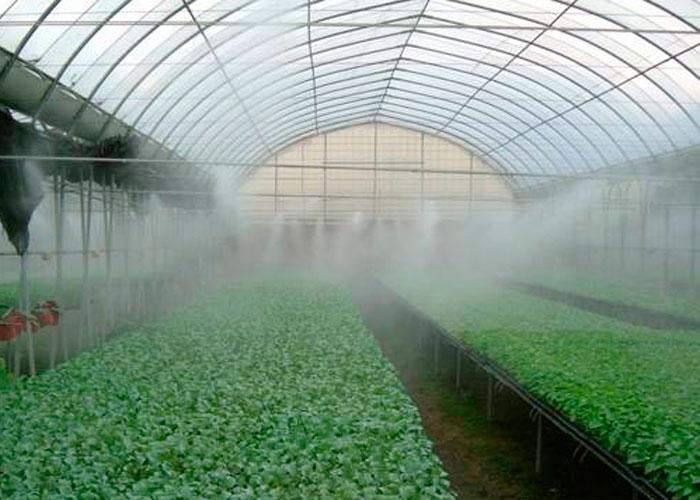¿Es importante el invernadero para la plantación de esquejes?