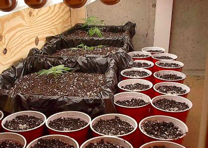 Cómo clonar las plantas (sólo usando el agua)