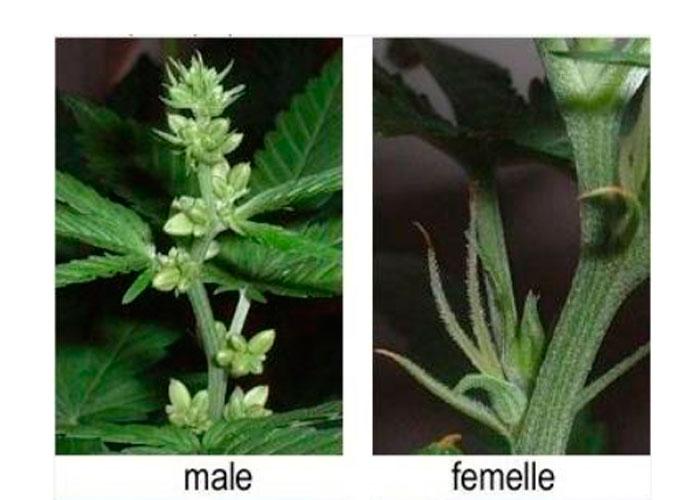 Foto de los indicios femeninos y masculinos