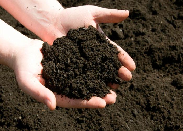 Comparación de la fibra de coco y el suelo