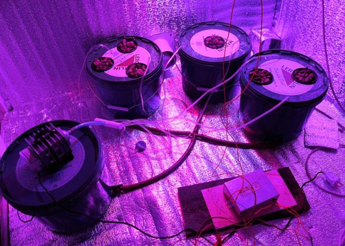 Creación del sistema periódico por sus pulgares para el cultivo de marihuana