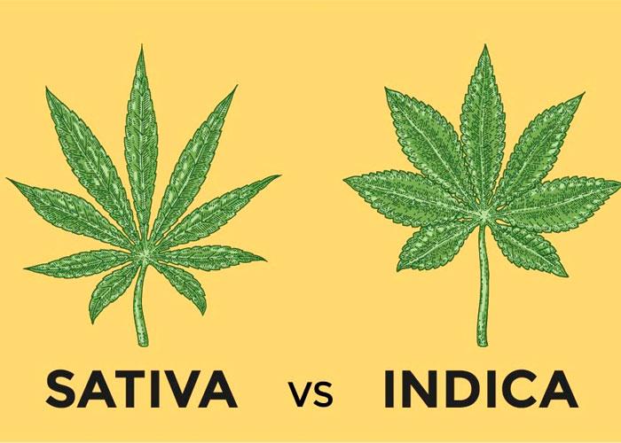Cannabis indica (la categoría Cannabis sativa sub sp. indica)